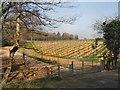 TQ2029 : Vineyard - Goldings by Paul Gillett