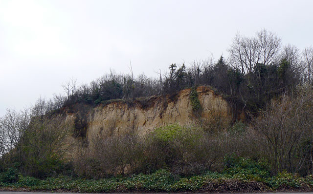 The Sand Martin Cliff, Chafford Gorges