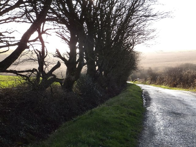 Trees beside the road at Trewollack