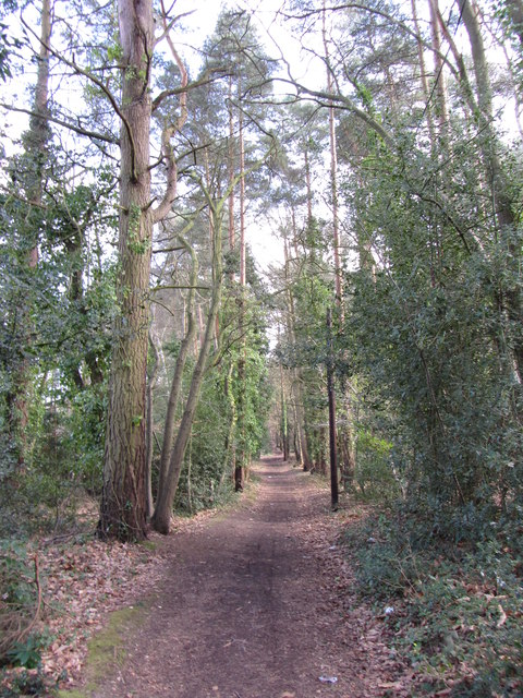 Edgebarrow Woods, Crowthorne