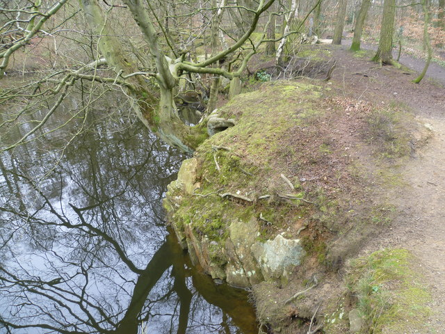 Green Pond in Hookstone Wood