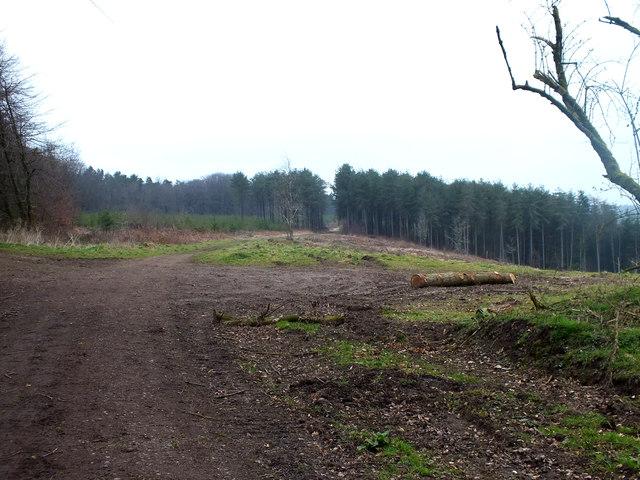 Newcombe Common