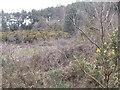 SU8636 : Hillside, Whitmoor Vale by Colin Smith