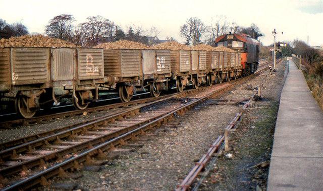 Beet train, Navan