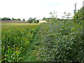 ST6561 : Marksbury Plain by Nigel Mykura