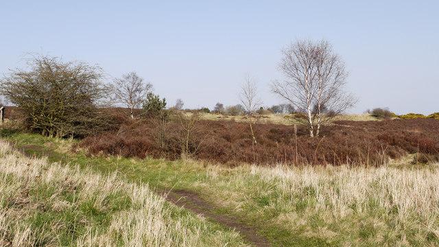 Waldridge Fell
