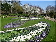 TQ2879 : In The Rose Garden, Hyde Park by Marathon