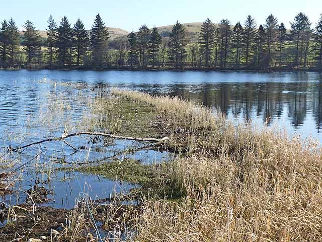View from the bird hide, Loch of Lintrathen
