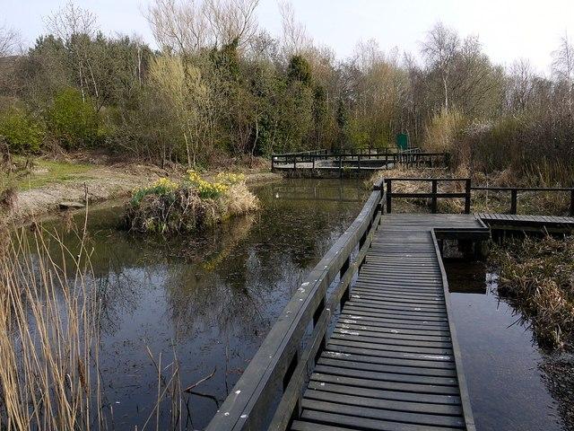 Ponds, Benwell Nature Park