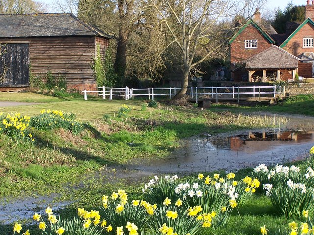 Riverside daffodils at West Dean