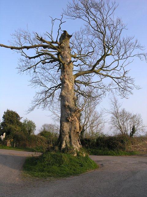 Tree roundabout