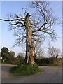 S0021 : Tree roundabout by Hywel Williams