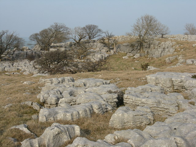 Limestone outcrop with trees
