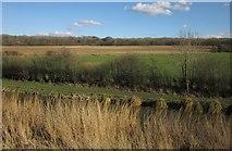 SU2763 : Canal and farmland, Crofton by Derek Harper