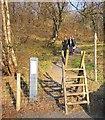 SH7357 : Ladder Stile by Chris McAuley