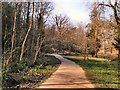 TQ8010 : Path in Alexandra Park by Paul Gillett