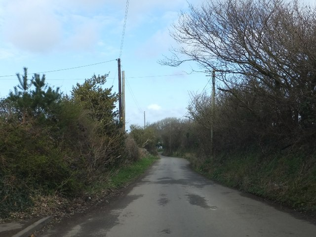 Windswept hedges on the road to Kestle Mill