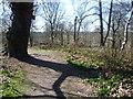 TQ6769 : Path through Ashenbank Wood by Marathon