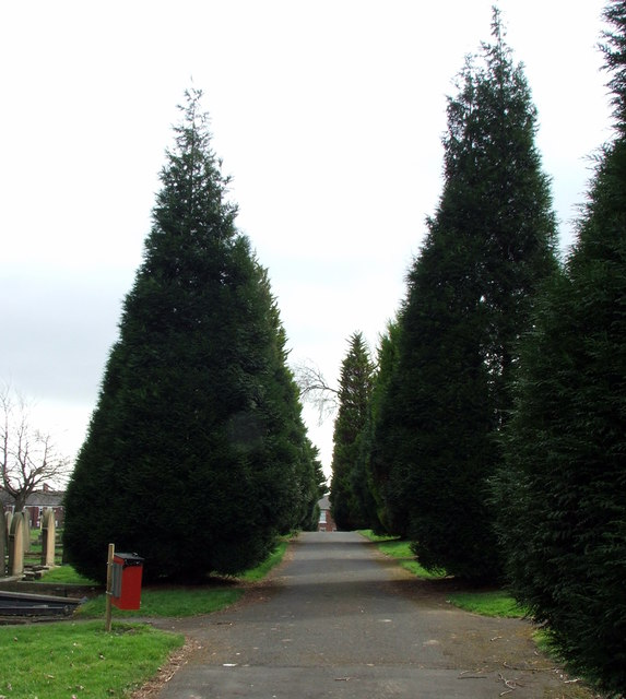 Conical Conifers