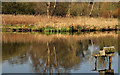 J4774 : Bird box, Kiltonga, Newtownards by Albert Bridge