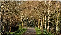 J4774 : Spring path, Kiltonga, Newtownards (2) by Albert Bridge