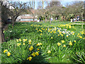 TQ2686 : Fenton House - spring flowers by Stephen Craven
