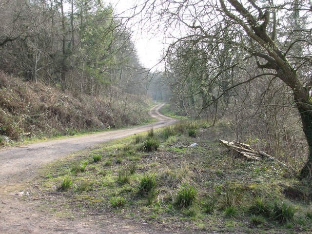 Wentwood Forest Trail