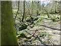 TQ1937 : Sussex Border Path alongside Highams Gill in Horsegills Wood by Dave Spicer