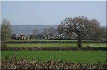 ST0705 : Fields near Dulford by Derek Harper