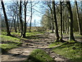 SK1985 : Footpath through Winhill Plantation by Andrew Hill
