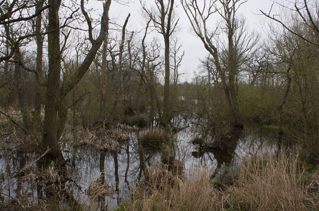 The pond in Old Wood