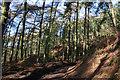 SJ5054 : Conifer plantation beneath Raw Head by Espresso Addict