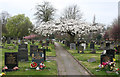 SJ7056 : Cherry blossom at Coppenhall Cemetery by Espresso Addict