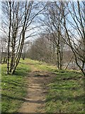 NY7063 : Path by the River South Tyne west of the Alston Arches Viaduct by Mike Quinn
