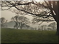 SX4552 : Evening at Mount Edgcumbe by Ruth Sharville