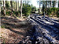 SY8190 : Forestry Track by Nigel Mykura