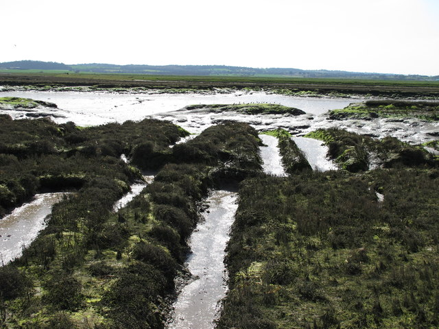 Salt Marsh & Mudflats