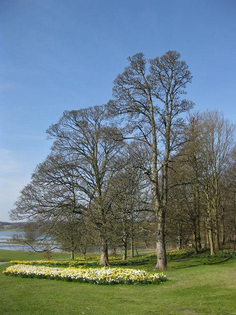 Early Spring, Castle Howard estate