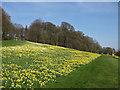 SE7170 : Terrace Walk, early spring by Pauline E