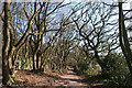 SJ5255 : Deciduous woodland near Grig Hill Farm by Espresso Addict