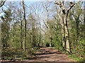 TQ6001 : Woodland at Hampden Park by Oast House Archive