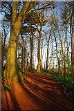 SX8760 : A Primley Path by Glyn Baker