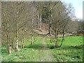 SD9922 : Footpath towards Round Hill Wood by Humphrey Bolton