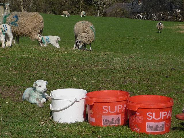 'I'm a Supa lamb'