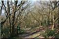 SJ3701 : Deciduous woodland on Resting Hill by Espresso Addict
