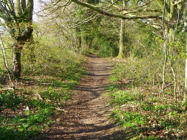 Bridleway near Martin Drove End