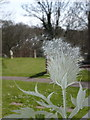 SZ3299 : Boldre: thistle detail in engraved church window by Chris Downer