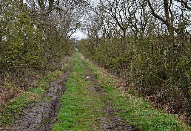Towards Limelands