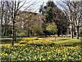TQ2806 : Spring flowers in Hove Park by Paul Gillett