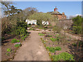 NY6128 : Medicinal herb garden, Acorn Bank by David Hawgood